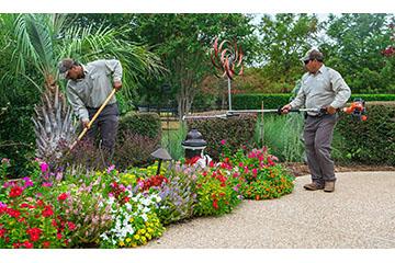 Efflorescence Palm Beach Island Gardener Crew